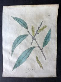 Woodville Medical Botany 1790's Hand Col Print. Salix Fragilis. Willow